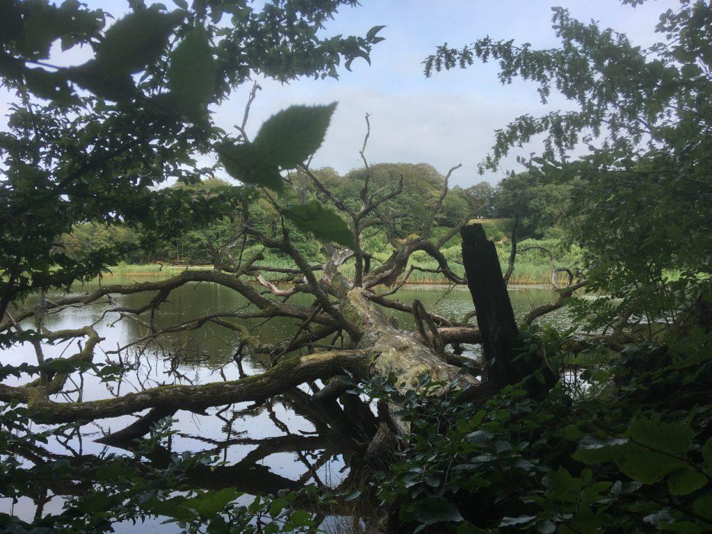 skovsø i Almindingen
